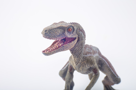 Great Velociraptor dinosaurs toy with open mouth in attack position on white background