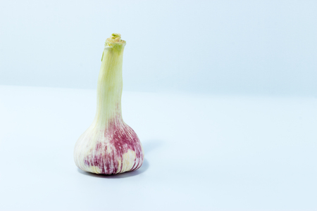 Young Fresh Garlic Isolated on White Background Photo from Studio