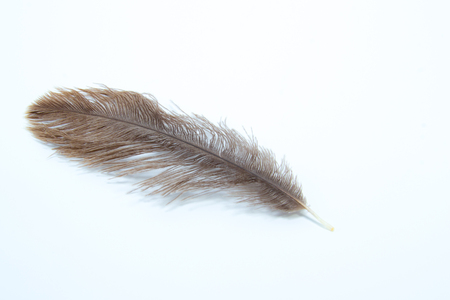 Brown ostrich feather with white background Stock Photo
