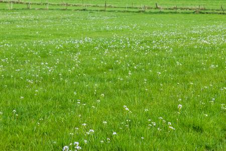 Spring flower field, green meadow Stock fotó