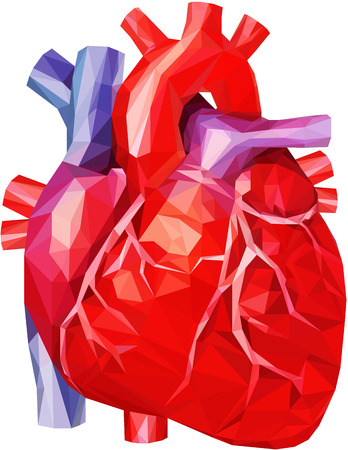 Human Heart in low poly Illustration