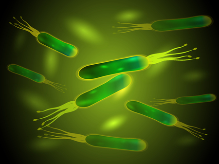 Helicobacter pylori bacteria . Vector. Best for medical, scientific and commercial design.