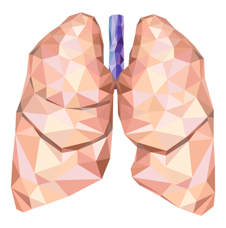 Realistic human lungs in low poly with trachea. Ilustração