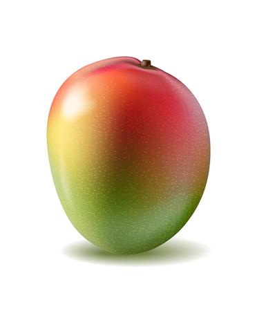 Mango fruit 3d realistic vector illustration 일러스트