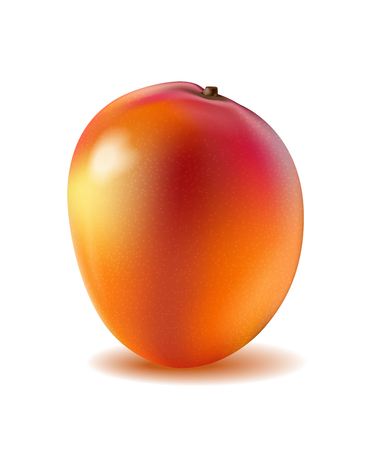 A Mango fruit for fresh juice. 3d realistic yellow, red, orange ripe mango isolated on white background for packaging or web design. Vector EPS 10.