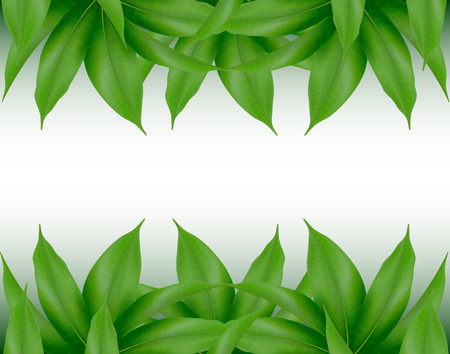 Mango leaves background for banner, celebration, holiday, packaging, poster. Realistic 3d leaf vector.