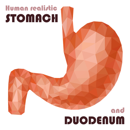 Realistic low poly human stomach and duodenum. Healthy digestive system. Abstract medical concept. Vector.