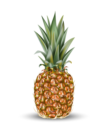 Pineapple ananas fruit for fresh juice. 3d realistic yellow, green, brown ripe pineapple isolated on white background for packaging or web design. Vector EPS 10.