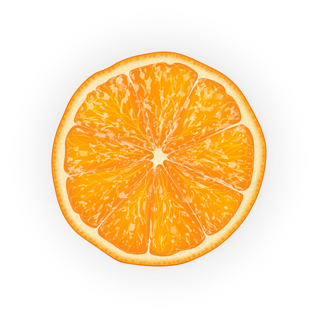 Realistic 3d Vector illustration of sliced orange fruit. Colourful citrus. Good for packaging design and ad. EPS 10.