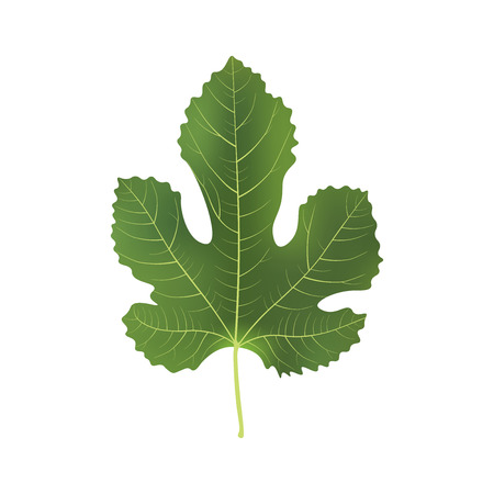 Realistic 3d Fig Leaf. Detailed 3d Illustration Isolated On White. Design Element For Web Or Print Packaging. Vector Illustration.