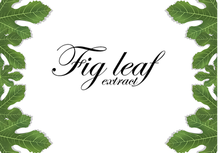 Fig leaves on white background. Figs leaf. Banner design elements. Vector illustration. Vettoriali