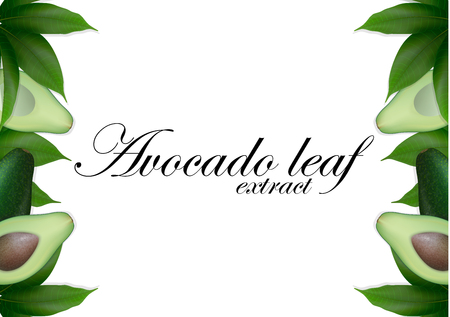 Sliced avocado background with leaves. Avocados seed with leaf.  Avocado halves. Top view with space for text. Vector Illustration.