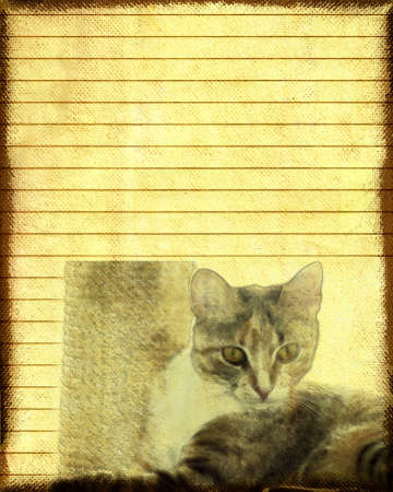 Paper notes:a cat staring photo