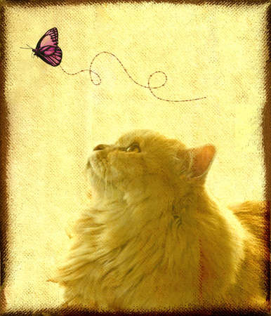 Letter paper:A lovely cat staring a butterfly photo