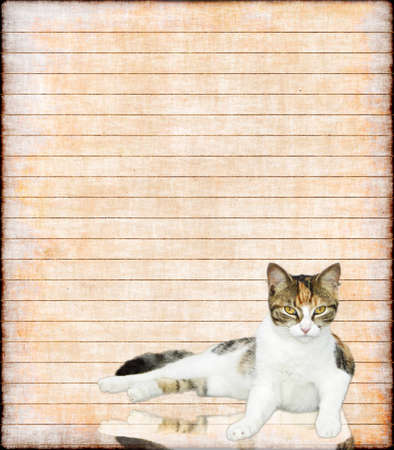Paper notes:a lined paper decorated with a lovely  staring cat  photo