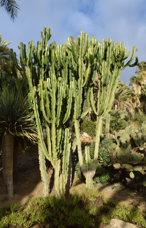 great: Great variety of Cactus