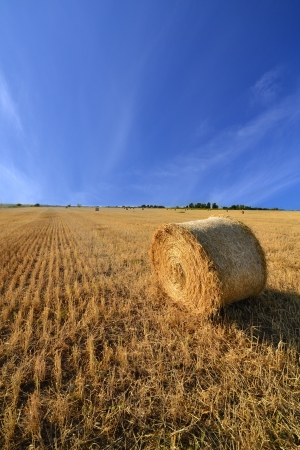 Beautiful summer countryside landscape photo