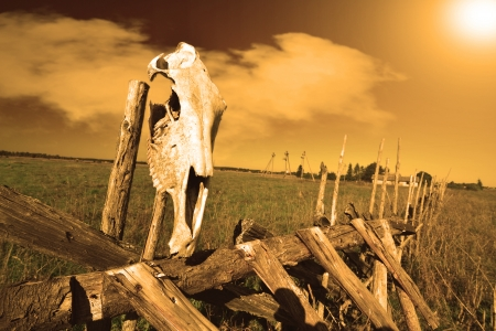 tacky: Animal skull on a tacky fence