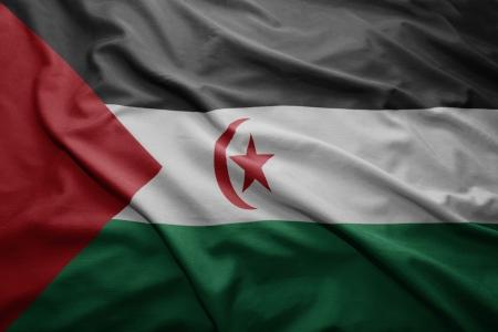 sahrawi arab democratic republic: Waving colorful Sahrawi Arab Democratic Republic flag