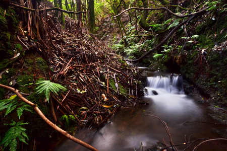 scenical: Beautiful waterfalls deep inside laurel forests Stock Photo