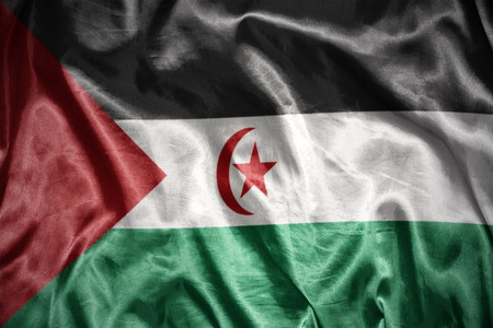 sahrawi arab democratic republic: waving and shining Sahrawi Arab Democratic Republic flag