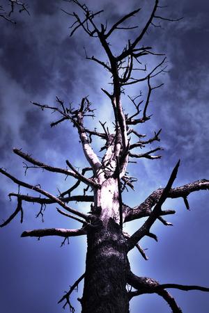 myst: burnt tree near evning dramatic skies