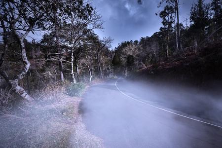 myst: sinister fog on the road. concept. danger