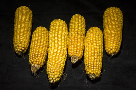 Vertically aligned six ears of corn  Modern and uncluttered composition in studio on black background  photo