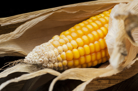 Vertically aligned six ears of corn photo