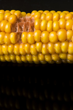 snacking: Snacking  Macro of ear of corn with copy space on black background Stock Photo