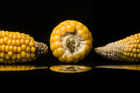 uncluttered: Multiple views of ripe ears of corn  Closeup of golden dry corns shooting in studio on black background  with reflections  Modern and uncluttered composition with copy space  Stock Photo