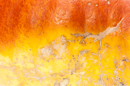 shinny: Leaf veins  Pumpkin background  Closeup macro full frame on a ripe orange pumpkin skin  Shooting studio  Stock Photo