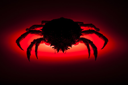forerunner: Scary silhouette  Red backlit effect on shadow figure of European spider crab  Maja Squinado  in studio  Hot plate  Spider crab cooking Stock Photo