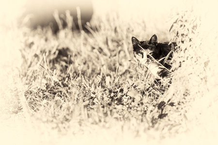 An adult tortoise-shell female cat looking at camera masked partially by a tree into the garden of the house  Black and white fine art portrait of domestic cat  photo