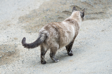 catechism: Cat walking on the road. Outdoors portrait of cute tortie cat color dot. Color Image