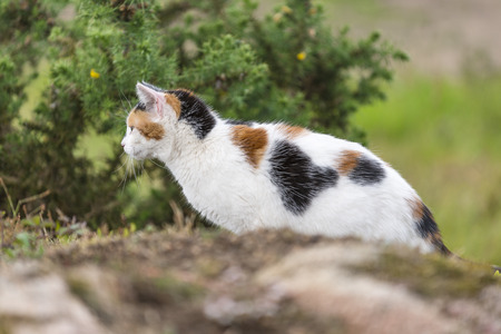 A cute domestic cat on the rock is staring at something right side. Outdoors portrait of mixed-breed cat. Color Image Stock Photo