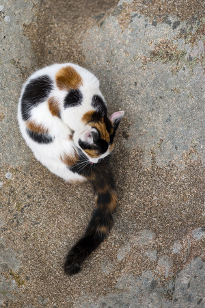 A cute mixed-breed cat grooming Itself on a rock. Outdoors portrait of domestic cat. Color Image Stock Photo