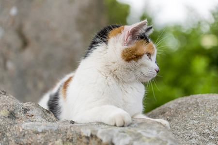 catechism: Closeup of cute cat prowling on a rock. Outdoors portrait of domestic cat. Color Image Stock Photo