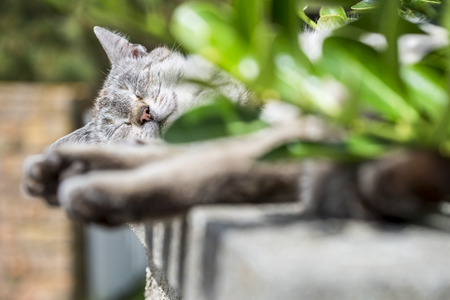 catechism: In background Focus on the head of an adult tabby cat sleeping soothing wall was low. Portrait of domestic cat. Color Image