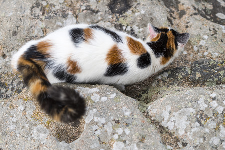 One cat on bird view is prowling on a rock With Some mimicry. Portrait of domestic cat in color image. Outdoors