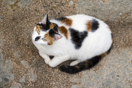 Bird view of a cat lying down on a rock. Animal head up and starring at camera. Outdoors portrait of domestic cat. Color Image Stock Photo