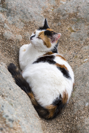 catechism: Bird view of a cat asleep on a rock. Outdoors portrait of domestic cat in colors