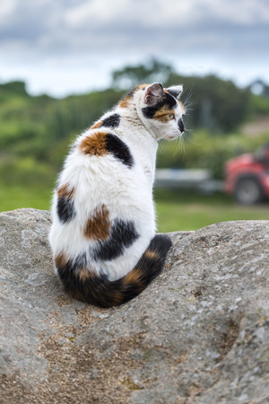 catechism: Outdoors portrait of domestic cat. Color image. A mixed-breed cat sitting on a rock prowling. Stock Photo