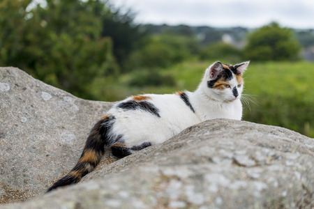 Outdoors portrait of domestic cat. Color image. One cat lying on a rock and starring.