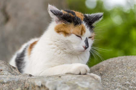 calico whiskers: Closeup of cute cat asleep on a rock. Outdoors portrait of domestic cat. Color Image Stock Photo