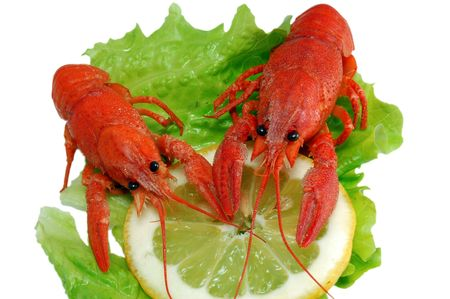 Boiled crayfishs on lettuce and lemon photo