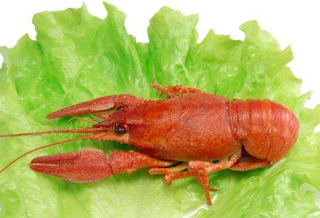 Boiled crayfish on lettuce  photo