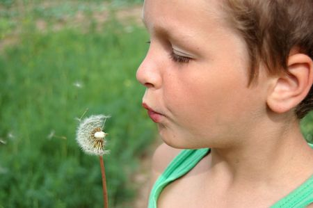 A young boy blowing a dandelion . photo