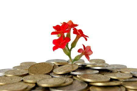 Coins and flower, isolated on white background photo