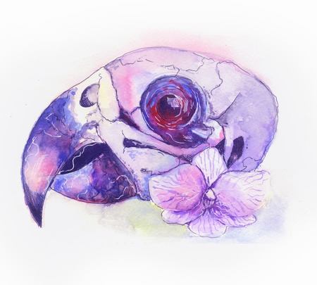 ornitology: water color skull of a parrot with flowers
